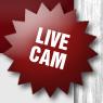 Live-Bilder aus der Wurfkiste - Welpen-WebCam