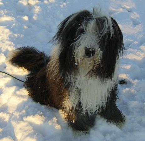 liebt den Schnee genauso wie seine Brüder und Schwestern!