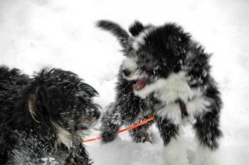 und danach toben im Schnee