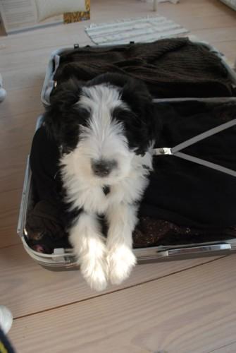mein_koffer