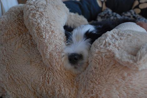 nie_ohne_meinen_teddy