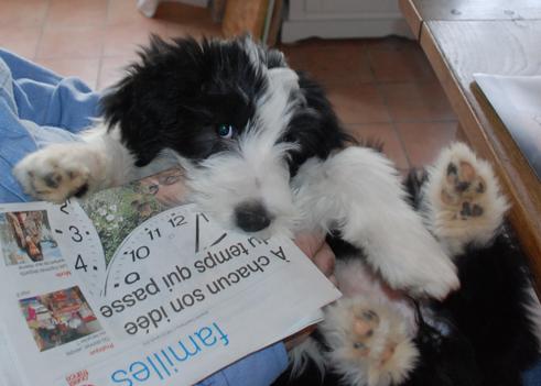 Charlotte hat Zeitungen zum Fressen gern