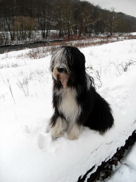 Topas im Schnee