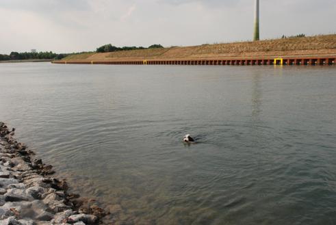 ja_wo_schwimmt_sie_denn