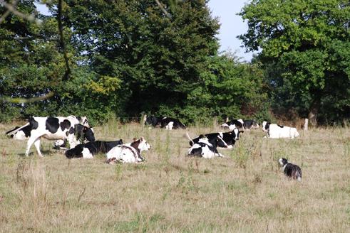 meine Herde