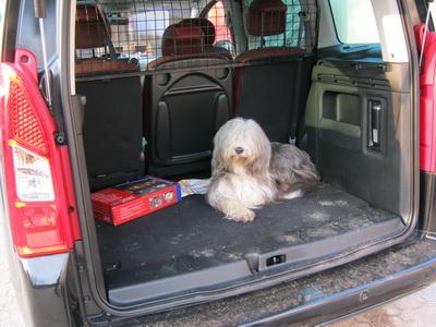 Whoopie wartet lieber im Auto