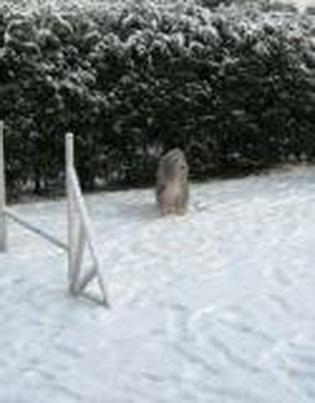 Whoopie im Schnee
