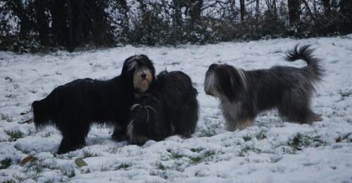 geniesst den Schnee mit Mexx und Aiyana!
