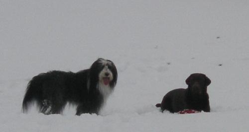 genießen den Schnee