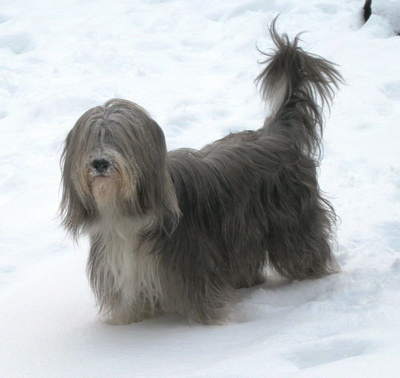 sooo viel Schnee