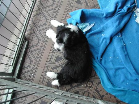 rosi-puppies-005_bildgrose-andern