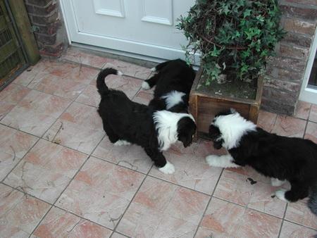 rosi-puppies-013_bildgrose-andern