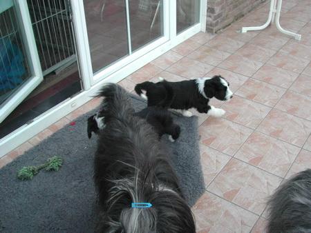 rosi-puppies-014_bildgrose-andern