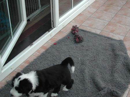 rosi-puppies-017_bildgrose-andern