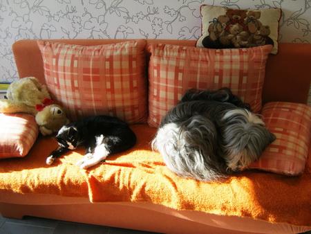Balou und Whoopie