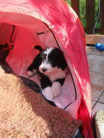 Üben für den Campingurlaub