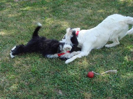 Spielen und Toben mit Hundefreund!