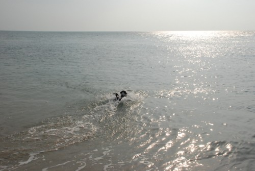 Kleiner Hund - grosses Meer!