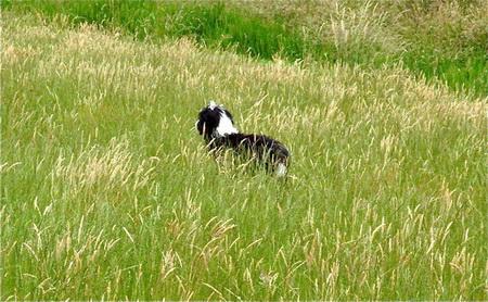 liebt es im hohen Gras