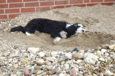 Mist, dann nehm ich halt ein Sandbad!