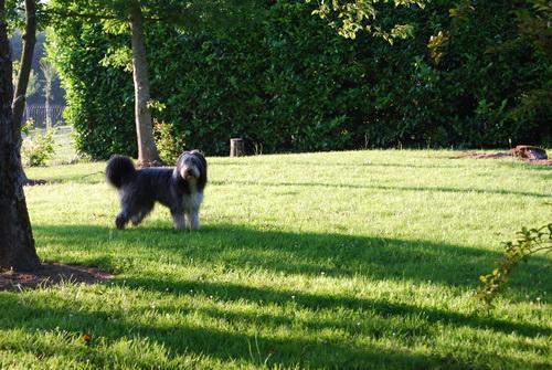 Bo im Garten!