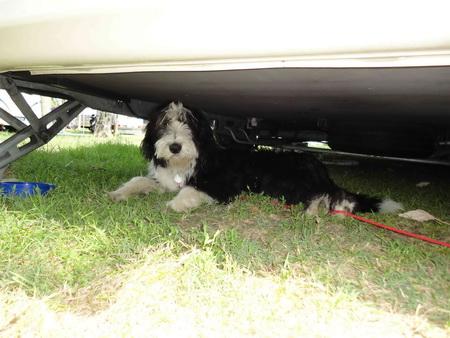 Wenn es mir zu warm wurde bin ich unter den Wohnwagen gegangen!
