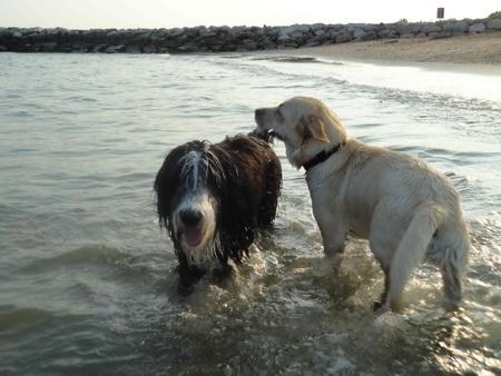 Im Wasser spielen mit anderen Hunden!