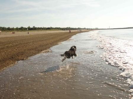 Und ab gehts in die Wellen!