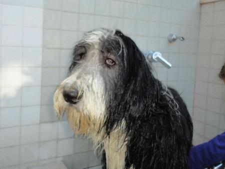 Immer dieses blöde duschen!