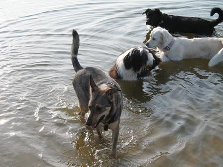Wasserspiele mit Chica!