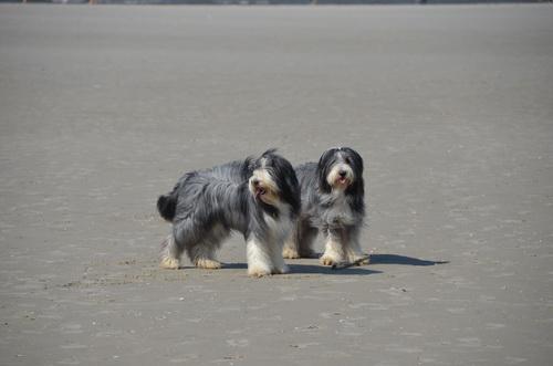 Wir rocken den Strand