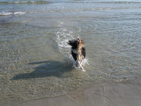 ... und ein Wasser-Beardie!!!