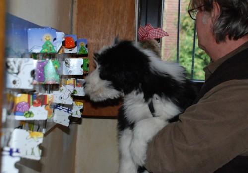 Leckerer Hunde Adventskalender!