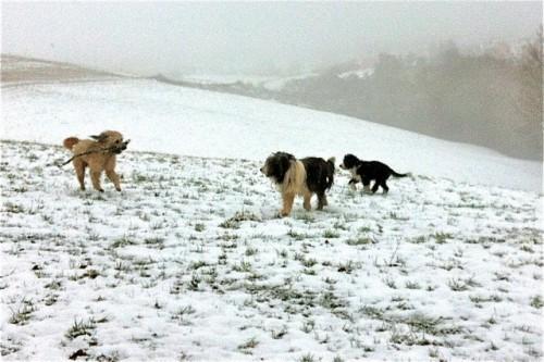 Camil und Beardies im Schnee!