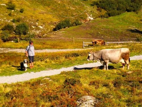 Komisch, die Kühe klingeln beim Gehen!