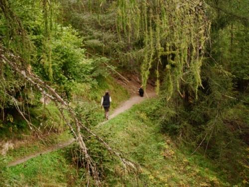Es gibt hier ganz andere Wälder als Zuhause!