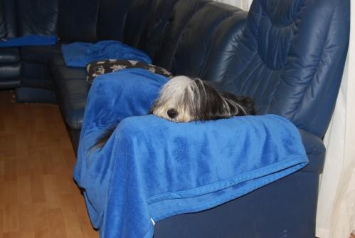 Holly - relaxen vor der Ausstellung!