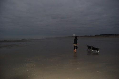 Ein ganzer Strand plus Mond für 2 Beardies