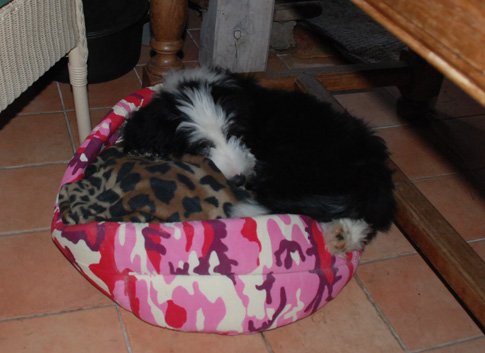 Pauline im Katzenkörbchen