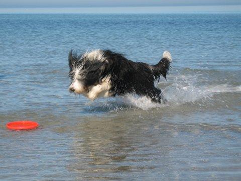 Immer noch verrückt im Wasser!