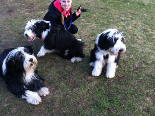 Sooo toll ists auf der Hundewiese!