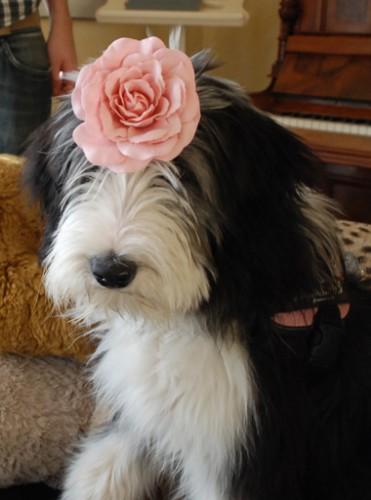 Blumenmädchen Pauli!