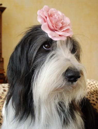 Blumenschlotte mit Mama-Mexx-Blick!