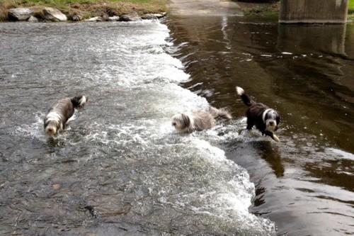 ... sogar im Fluss haben wir gesucht ...