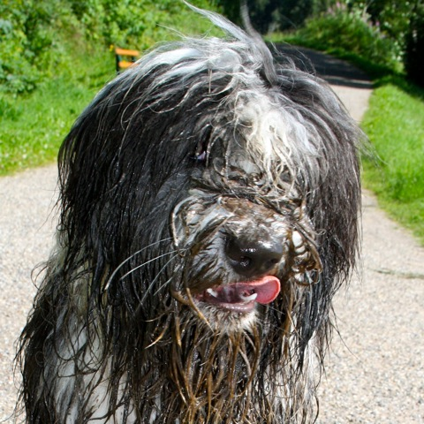 """ugliest dog of the world!"""