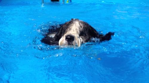 Herrlich so ein Swimmingpool!