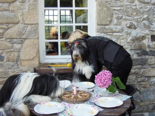 Hilfe, Rosi - die Charlotte klaut unsere Geburtstagstorte!