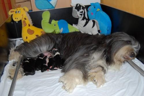 Mama Mexx und die Babies des B-Wurfs!