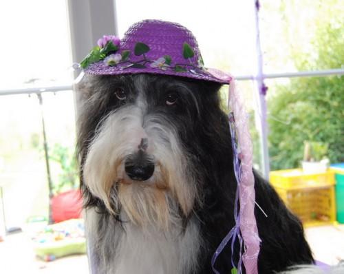 Warum muss ich diesen Hut tragen!!!