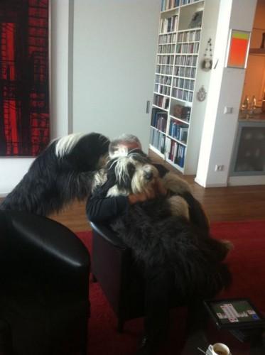 Zwei tolle schwarze Beardiejungs!